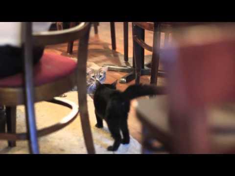 Café Chat l'heureux - cat café Montréal