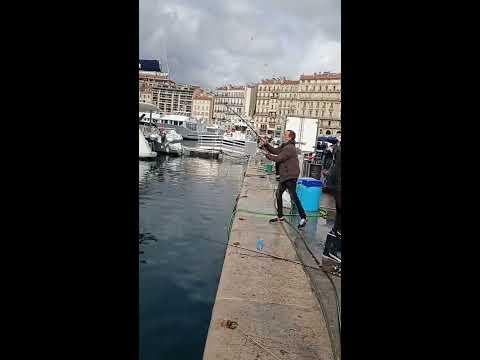 Pêche du Loup 8kg Marseille vieux port