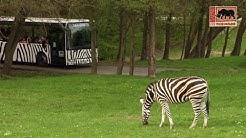 Zoo Dvůr Králove, Tschechien