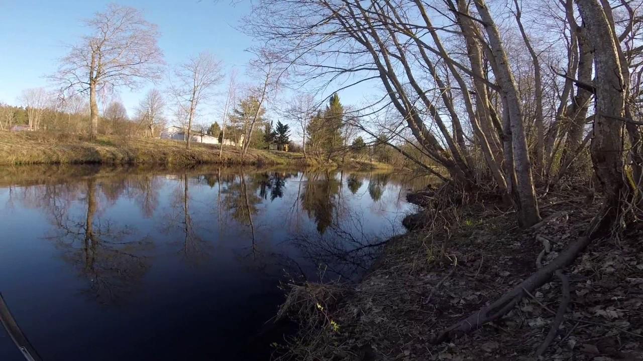 ловля плотвы в апреле на поплавочную удочку