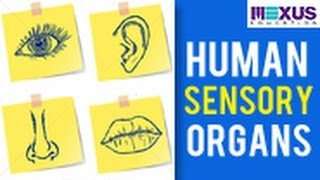 Human Sensory Organs - Ears, Nose and Tongue