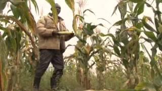 On The Farm: Churchill Ojok, Maize farmer in Amuru district