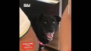 Funniest dog compilation on the Internet