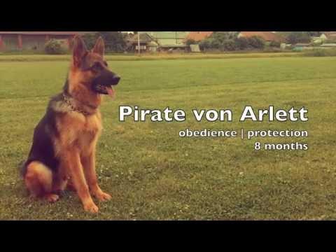 Pirate von Arlett