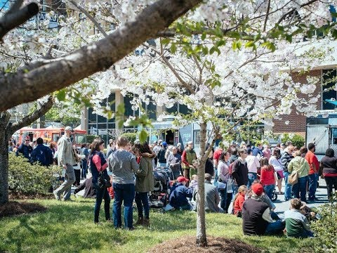 Discover the International Cherry Blossom Festival in Macon, GA