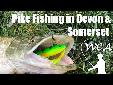 Pike Fishing With Lures In Devon & Somerset UK