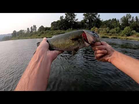 Fishing The Umpqua River For Smallmouth Bass 8-16-18