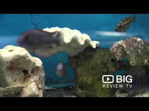 Aquotix Aquariums Store In Canning Vale WA Selling Pet Fish And Aquarium