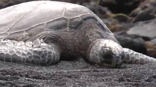 Aloha Aina  Love of the Land Hawaii Documentary   Big Island, Kauai
