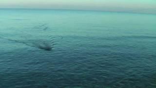 FISHING ΨΑΡΕΜΑ ΧΤΑΠΟΔΙ ΜΕ ΔΟΛΩΜΑ ΜΟΥΡΜΟΥΡΑ