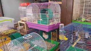 Птичий рынок Одесса. Рынок животных. Гуляем по Староконке. Блошиный рынок. Рынок собак. Животные.