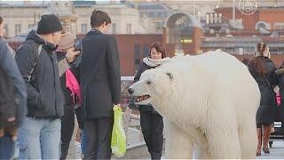 Белый медведь прогулялся по улицам Лондона (новости)