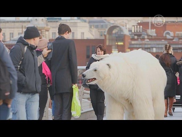Прикол новости про медведей и коноплю скачать диктор конопля медведи