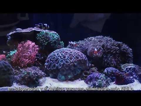 Arena de playa para el acuario y limpieza de filtros, respuestas suscriptoresиз YouTube · Длительность: 12 мин45 с