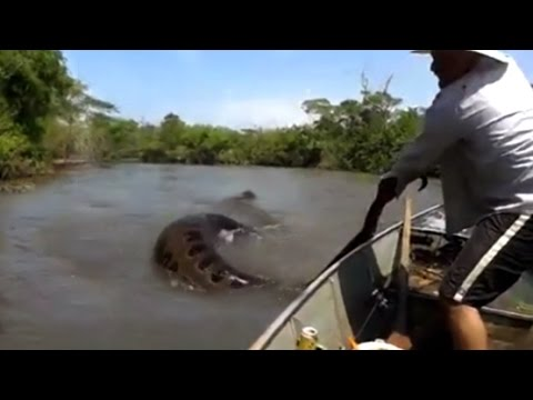 Thumbnail: MAN GRABS GIANT SNAKE FROM THE WATER