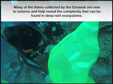 Cupping Deepwater Fishes