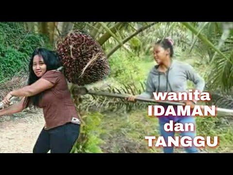 wanita tangguh pekerja kebun kelapa sawit