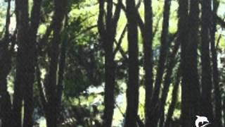 The Czars - Mein Freund der Baum