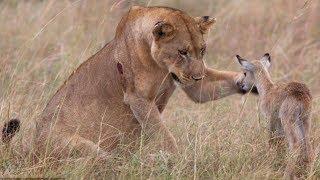 Quand les animaux sauvent d'autres animaux