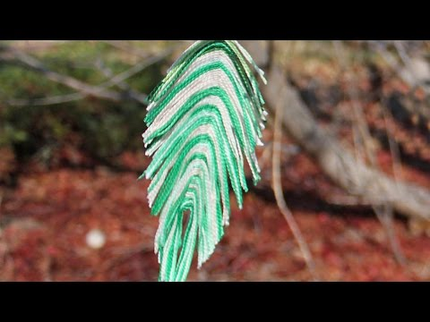 Create Beautiful Homemade Feathers - DIY Home - Guidecentral