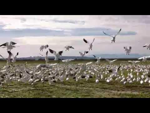 कर ले जतन हज़ार पंछी उड जाना. . भजन. .कंचन कुमार