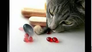 витамины для кошек весной