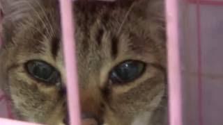 Привет от кота Феликса