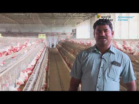 Srinivasa Farms - Layer Farmers- World Egg Day 2018