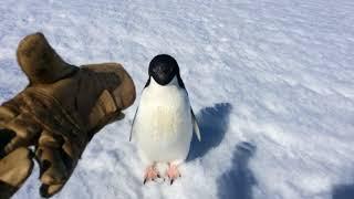 Злой пингвин