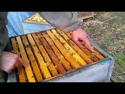 Как подготовить пчел к зимовке в ульях