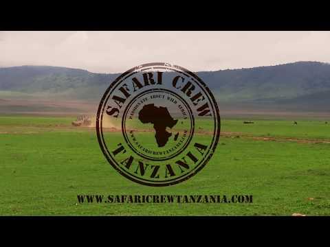 Safari Crew Tanzania, Passionate about Wild Africa
