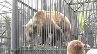 Бурый медведь в зоопарке Роев Ручей(Это видеоизображение было загружено с помощью программы Canon Utilities Movie Uploader for YouTube., 2011-05-14T10:35:04.000Z)