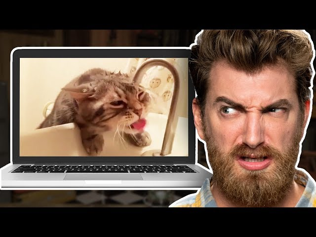 Reacting to the Cutest Cats on the Internet