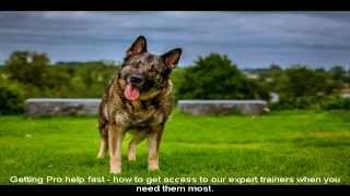 German Shepherd Rescue Nj Tips