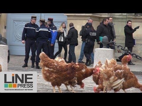 Manif pour Tous. Lâcher de poules devant l'Assemblée Nationale / Paris - France 04 décembre 2013