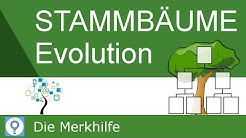 Stammbäume erstellen & verstehen - Prinzipien der Stammbaumentwicklung | Evolution 22