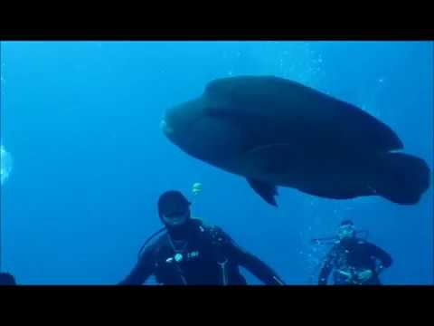 Humphead Wrasse At St John's Caves, Red Sea, Egypt  MY Emperor Asmaa  Feb 2018
