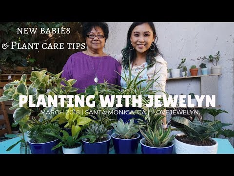 Planting with Jewelyn: new Las Vegas & Los Angeles plant babies | March 2018 | ILOVEJEWELYN