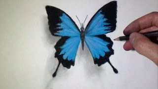 How to draw a realistic Butterfly - Time Lapse