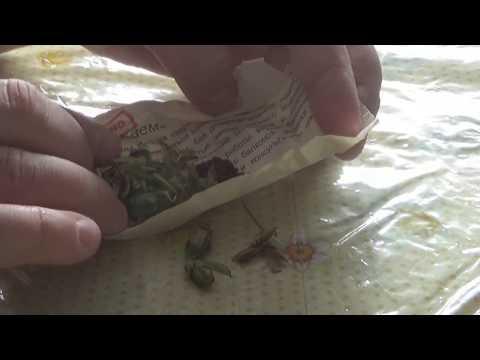 Как собрать семена с анютиных глазок видео