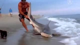 Рибалка зловив акулу і руками витягнув її на берег (новости)