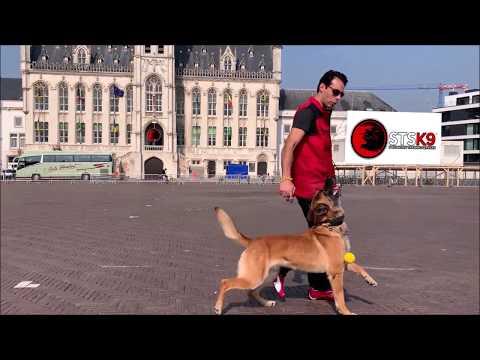 STSK9's UltimateControl® Dog Training System