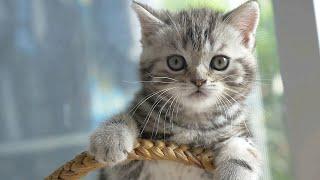 Kucing Lucu Meong-Meong, imut, dan Gemesin Banget cuma ada disini