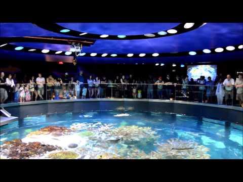 New England Aquarium in Boston - 2015