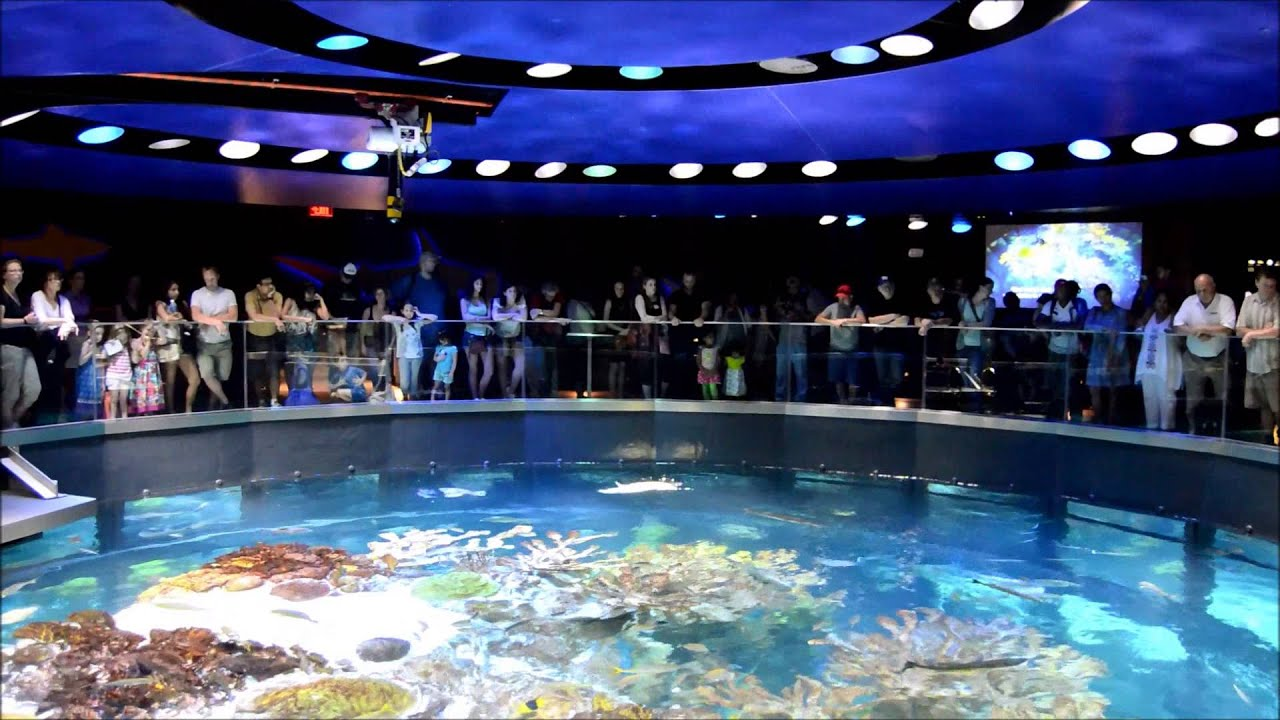 New England Aquarium In Boston 2015 Youtube