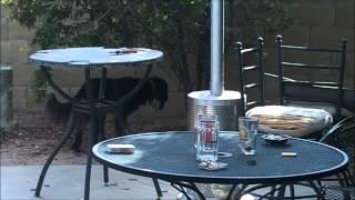 OBSESSIVE COMPULSIVE DOG TRAINING!