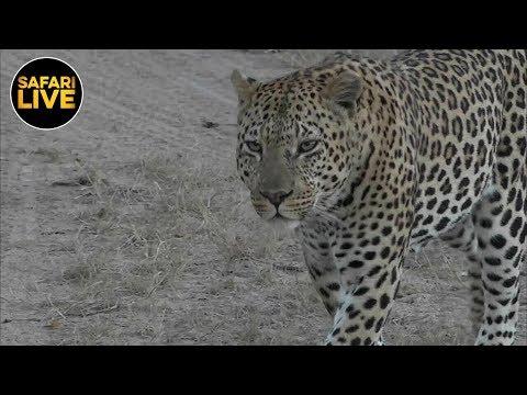 safariLIVE - Sunrise Safari - May 14, 2019