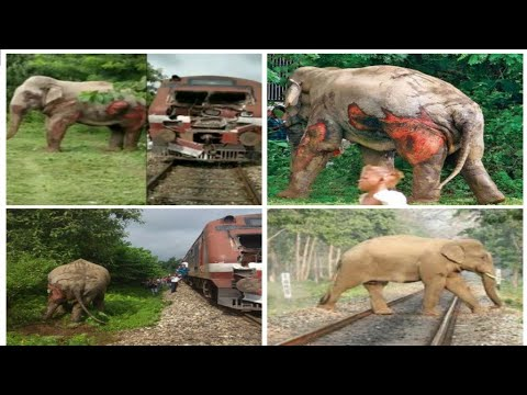 Elephant injured || at railway track. By Train.|| Viral video|| NEWS 1 TELANGANA.