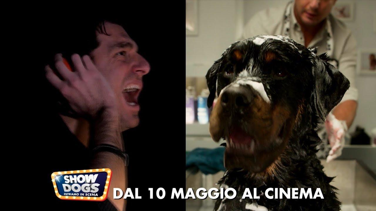 show dogs entriamo in scena spot 15 c youtube On show dogs entriamo in scena