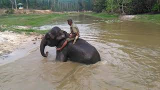 Elephant taking bath in dula hajra safari park, coz bazar.april 6, 2018